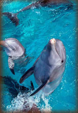 Dauphins